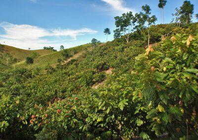 betulia-landscape
