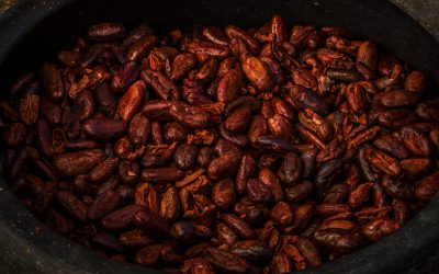 The History of Cacao: From the Maya to Spain to the World