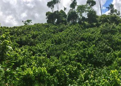 betulia-plants-h600