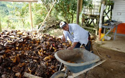 Our Innovation: Cacao Pod Husk Recycling
